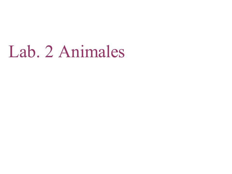 Copyright © 2008 Pearson Education, Inc., publishing as Pearson Benjamin Cummings Insectos El Subfilo Hexápoda, los insectos y sus relacionados, incluye más especies que todos los demás grupos de animales combinados.