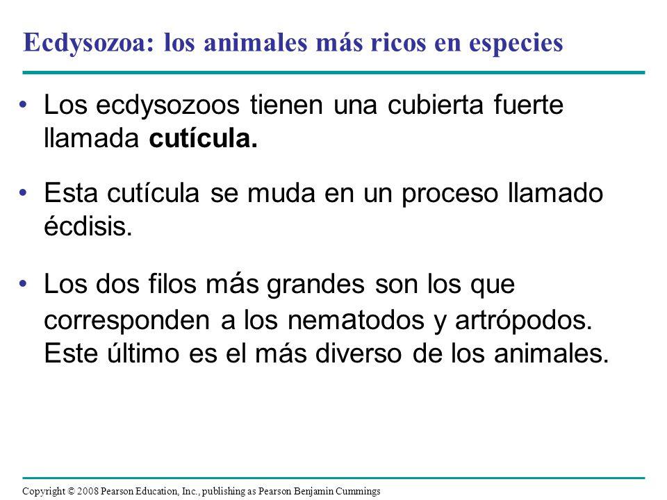 Copyright © 2008 Pearson Education, Inc., publishing as Pearson Benjamin Cummings Filo Nematoda Los nematodos, o gusanos redondos, se encuentran en la mayoría de los hábitats acuáticos, en suelos, en tejidos húmedos de plantas y en fluidos y tejidos de animales.