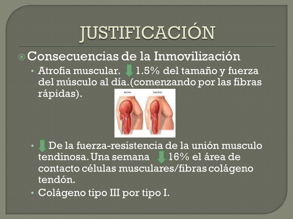 Consecuencias de la Inmovilización Atrofia muscular. 1.5% del tamaño y fuerza del músculo al día.(comenzando por las fibras rápidas). De la fuerza-res