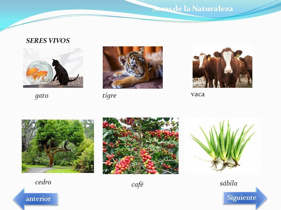 SERES VIVOS gatotigre vaca cedro café sábila Seres de la Naturaleza Siguiente anterior
