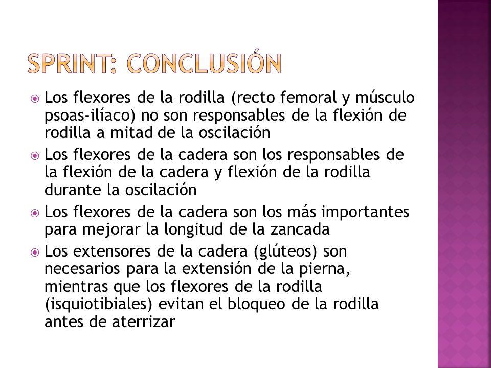 Los flexores de la rodilla (recto femoral y músculo psoas-ilíaco) no son responsables de la flexión de rodilla a mitad de la oscilación Los flexores d