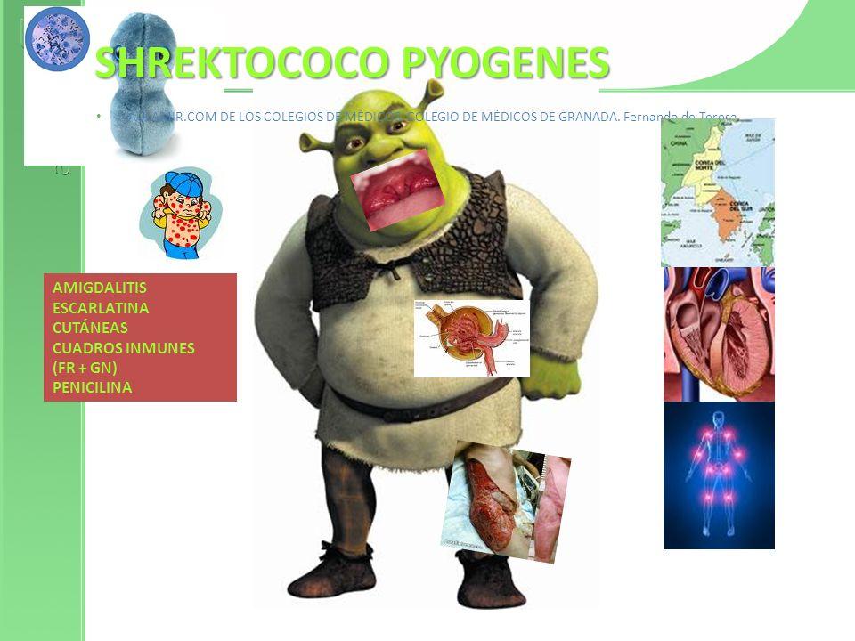 St.pyogenes