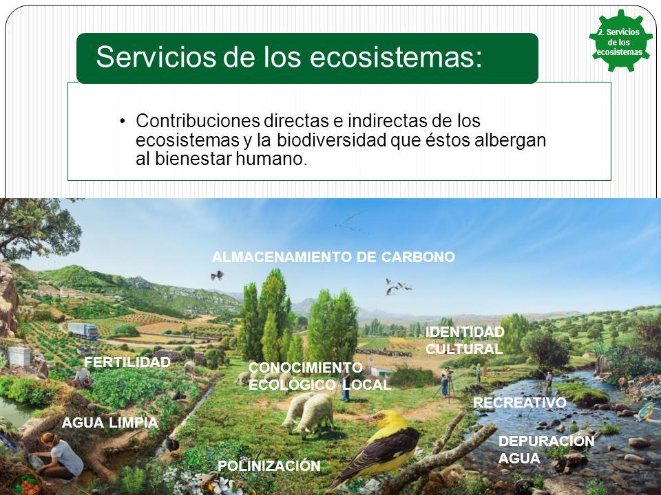 REGULACION CLIMATICA ALIMENTOS DEPURACIÓN AGUA RECREATIVO IDENTIDAD CULTURAL CONOCIMIENTO ECOLÓGICO LOCAL POLINIZACIÓN FERTILIDAD AGUA LIMPIA Contribuciones directas e indirectas de los ecosistemas y la biodiversidad que éstos albergan al bienestar humano.