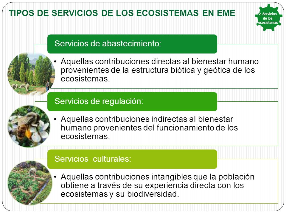 TIPOS DE SERVICIOS DE LOS ECOSISTEMAS EN EME Aquellas contribuciones directas al bienestar humano provenientes de la estructura biótica y geótica de los ecosistemas.