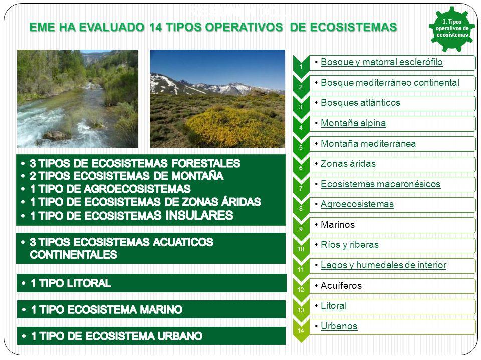RESUM NDO… EME HA EVALUADO 14 TIPOS OPERATIVOS DE ECOSISTEMAS 1 Bosque y matorral esclerófilo 2 Bosque mediterráneo continental 3 Bosques atlánticos 4 Montaña alpina 5 Montaña mediterránea 6 Zonas áridas 7 Ecosistemas macaronésicos 8 Agroecosistemas 9 Marinos 10 Ríos y riberas 11 Lagos y humedales de interior 12 Acuíferos 13 Litoral 14 Urbanos 3.