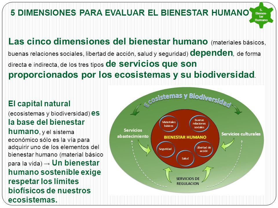 5 DIMENSIONES PARA EVALUAR EL BIENESTAR HUMANO Las cinco dimensiones del bienestar humano (materiales básicos, buenas relaciones sociales, libertad de acción, salud y seguridad) dependen, de forma directa e indirecta, de los tres tipos de servicios que son proporcionados por los ecosistemas y su biodiversidad.