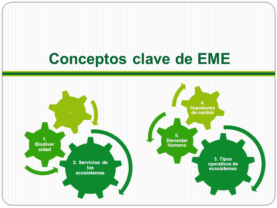 Conceptos clave de EME 3.Tipos operativos de ecosistemas 5.
