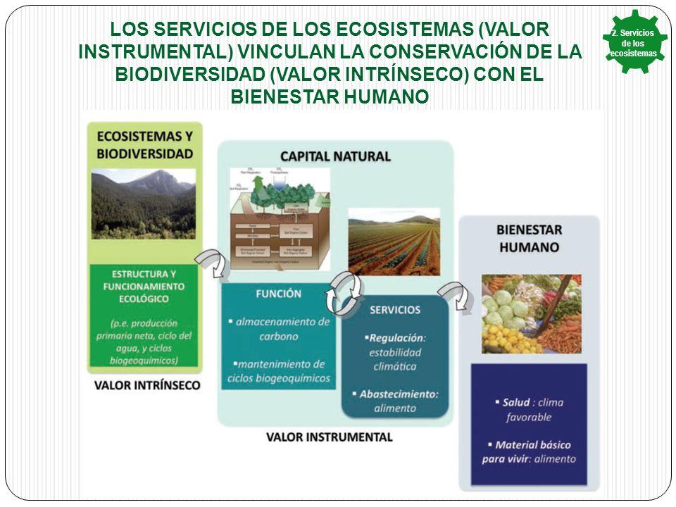 LOS SERVICIOS DE LOS ECOSISTEMAS (VALOR INSTRUMENTAL) VINCULAN LA CONSERVACIÓN DE LA BIODIVERSIDAD (VALOR INTRÍNSECO) CON EL BIENESTAR HUMANO 2.