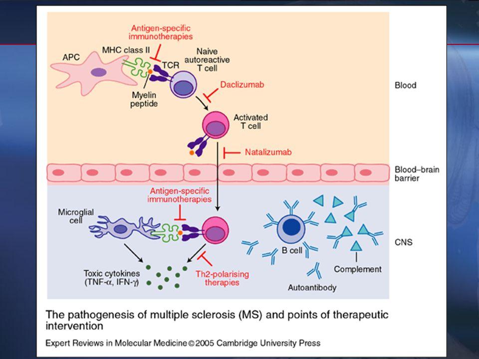 3- Fc dirigidos contra los diferentes mecanismos patogénicos - bloqueo de las cls T autorreactivas periféricas: AcM frente a IL2 alfa (daclizumab) - i