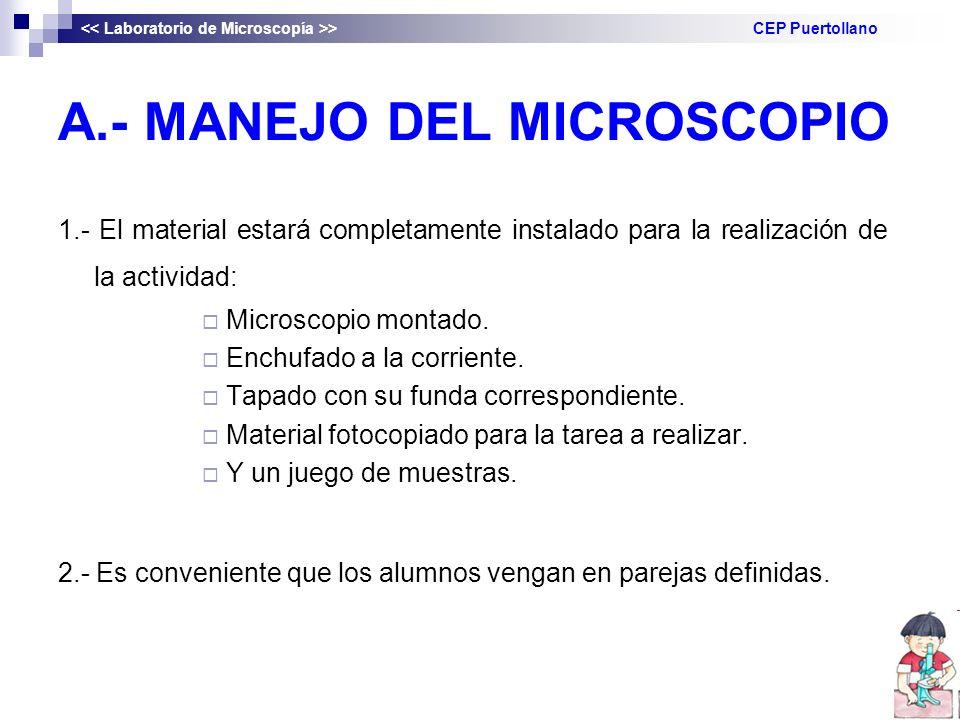A.- MANEJO DEL MICROSCOPIO 1.- El material estará completamente instalado para la realización de la actividad: Microscopio montado. Enchufado a la cor
