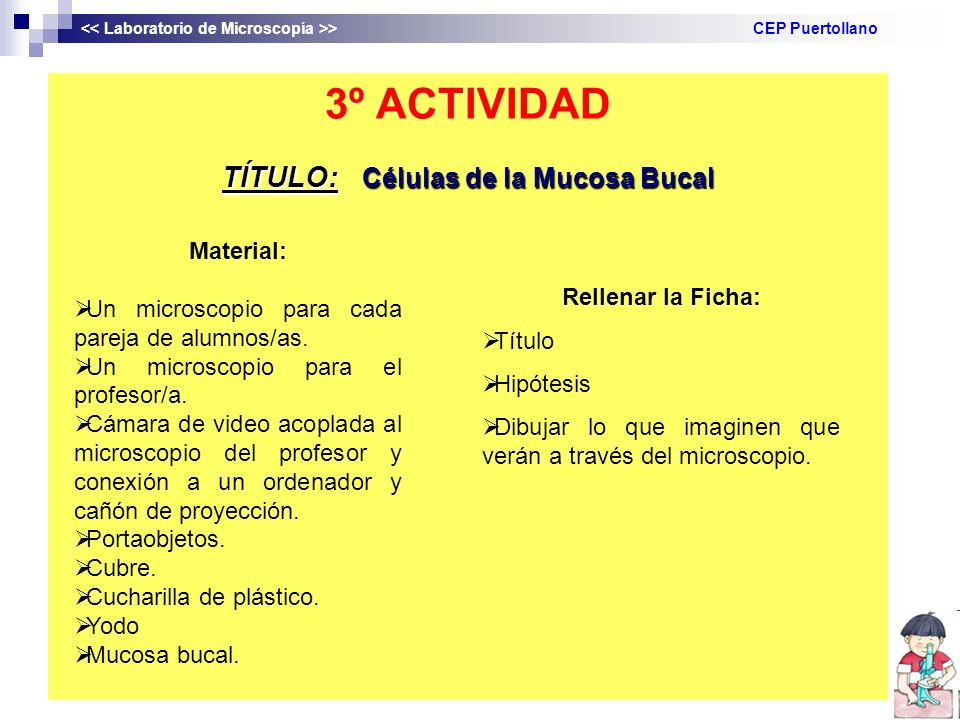 3º ACTIVIDAD TÍTULO: Células de la Mucosa Bucal > CEP Puertollano Material: Un microscopio para cada pareja de alumnos/as. Un microscopio para el prof