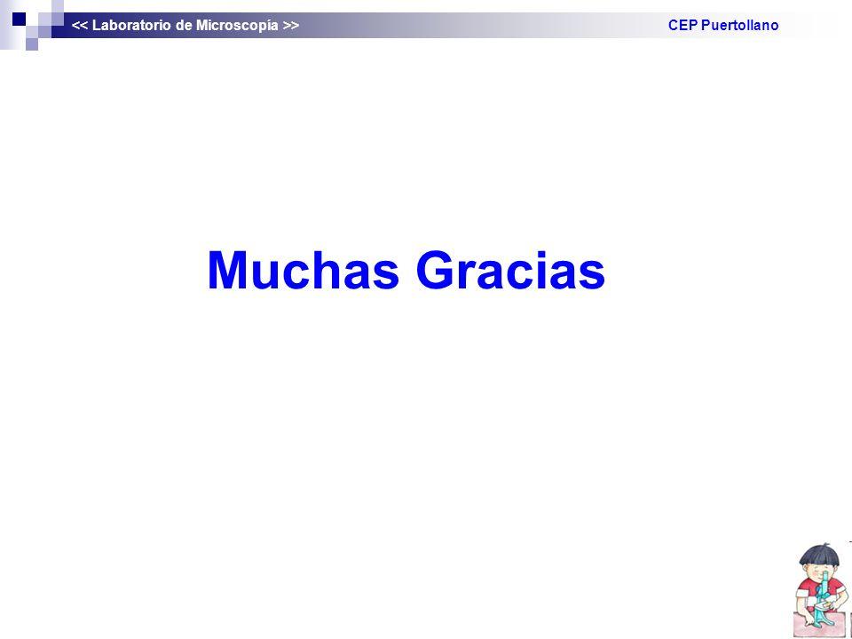 Muchas Gracias > CEP Puertollano