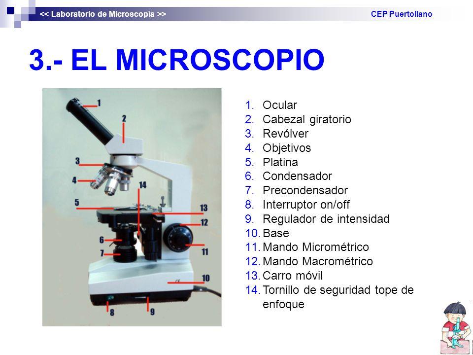3.- EL MICROSCOPIO > CEP Puertollano 1.Ocular 2.Cabezal giratorio 3.Revólver 4.Objetivos 5.Platina 6.Condensador 7.Precondensador 8.Interruptor on/off