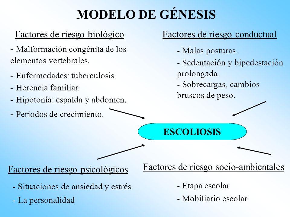 MODELO DE GÉNESIS Factores de riesgo biológico - Malformación congénita de los elementos vertebrales.