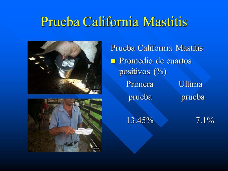 Prueba California Mastitis Promedio de cuartos positivos (%) Primera Ultima prueba prueba 13.45% 7.1%