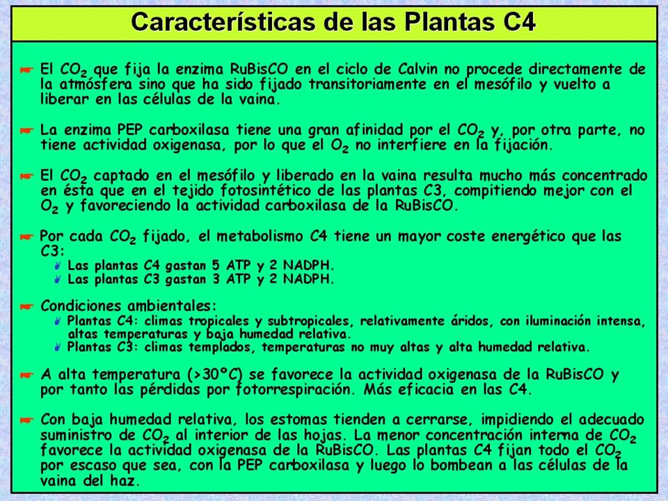 Mecanismo Fotosintético C4