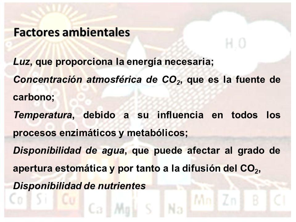 Factores que afectan a la Fotosíntesis
