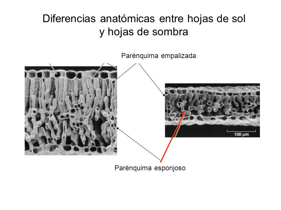 Propiedades ópticas de las hojas Reflexión Transmisión ción