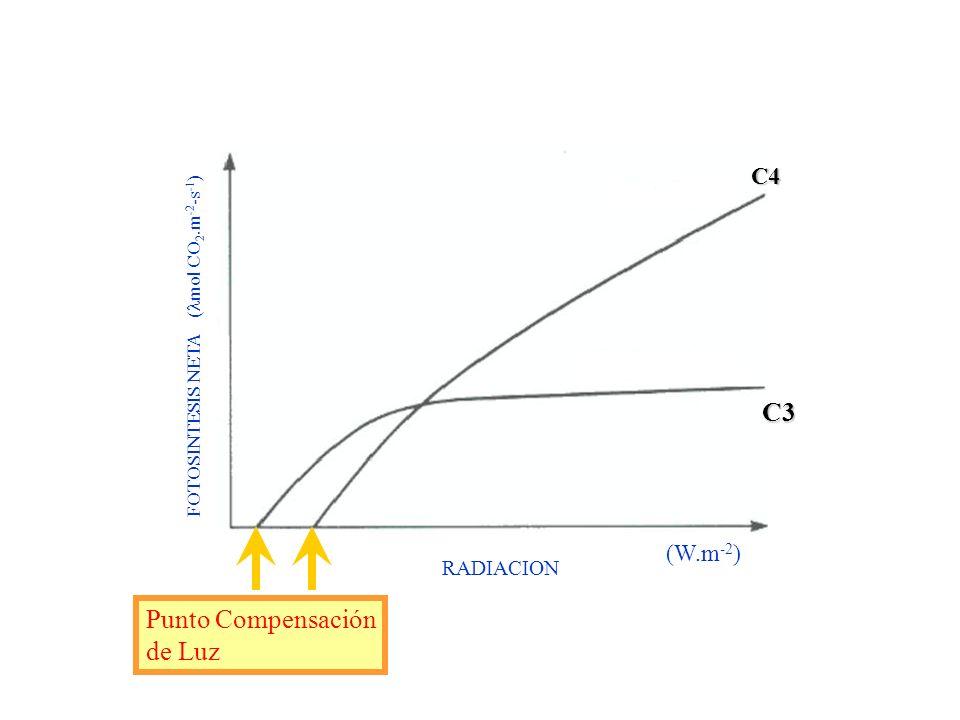 Punto de Compensación de LUZ La irradiancia donde se iguala la asimilación fotosintética del CO 2 con el CO 2 liberado en la respiración. A partir del