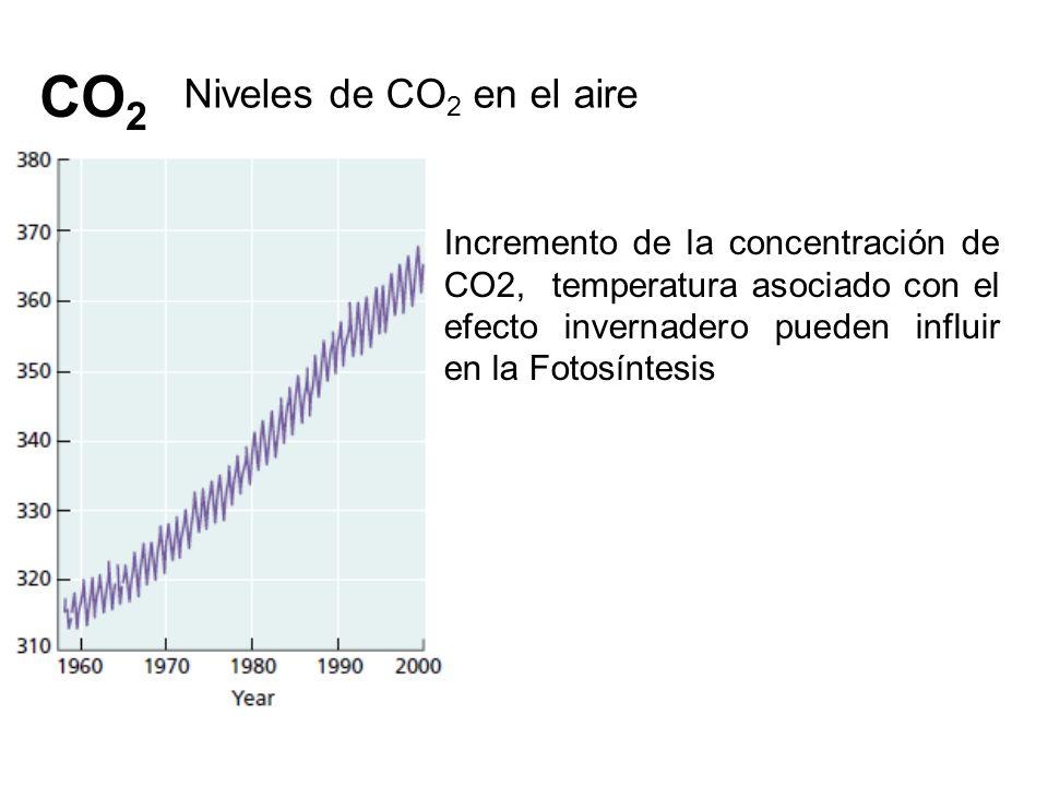 FOTOSINTESIS NETA ( mol CO 2.m -2 -s -1 ) RADIACION (W.m -2 ) Punto Compensación de Luz C4 C3