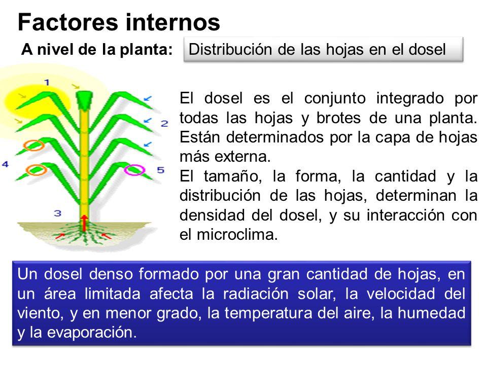 Factores internos A nivel de hoja: El aparato fotosintético, la densidad, distribución y comportamiento de los estomas; la estructura de la hoja, es d