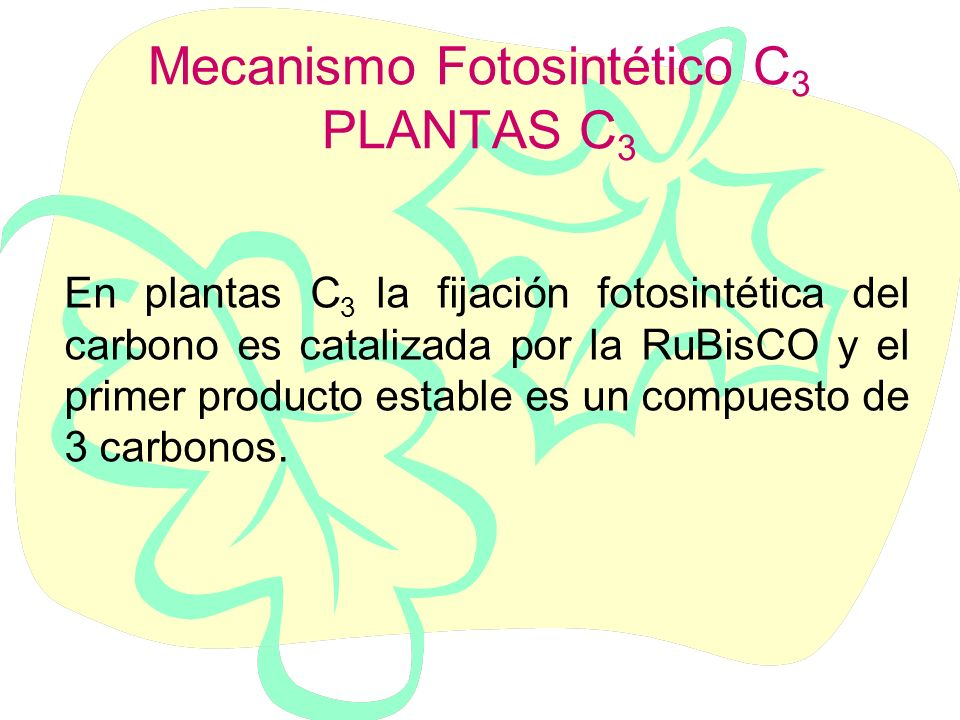 CICLO DE CALVIN CARBOXILACION REDUCCION REGENERACION Enzima Ribulosa bifosfato carboxilasa/oxigenasa RUBISCO VIDEO