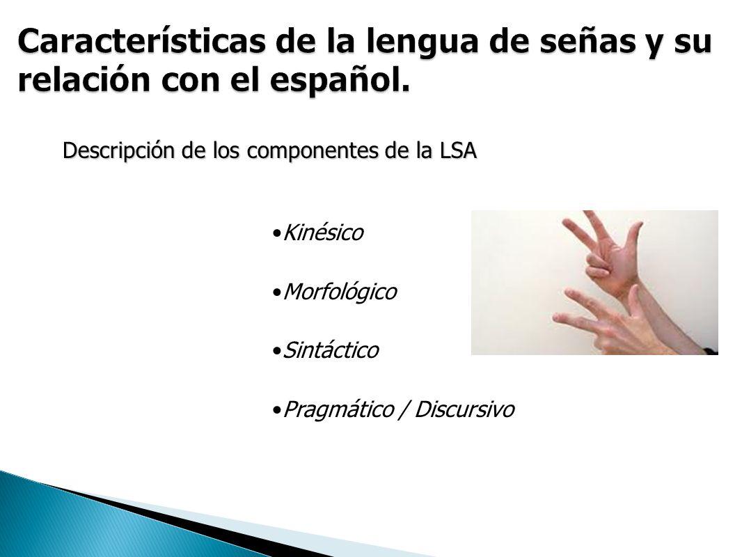 Descripción de los componentes de la LSA Kinésico Morfológico Sintáctico Pragmático / Discursivo