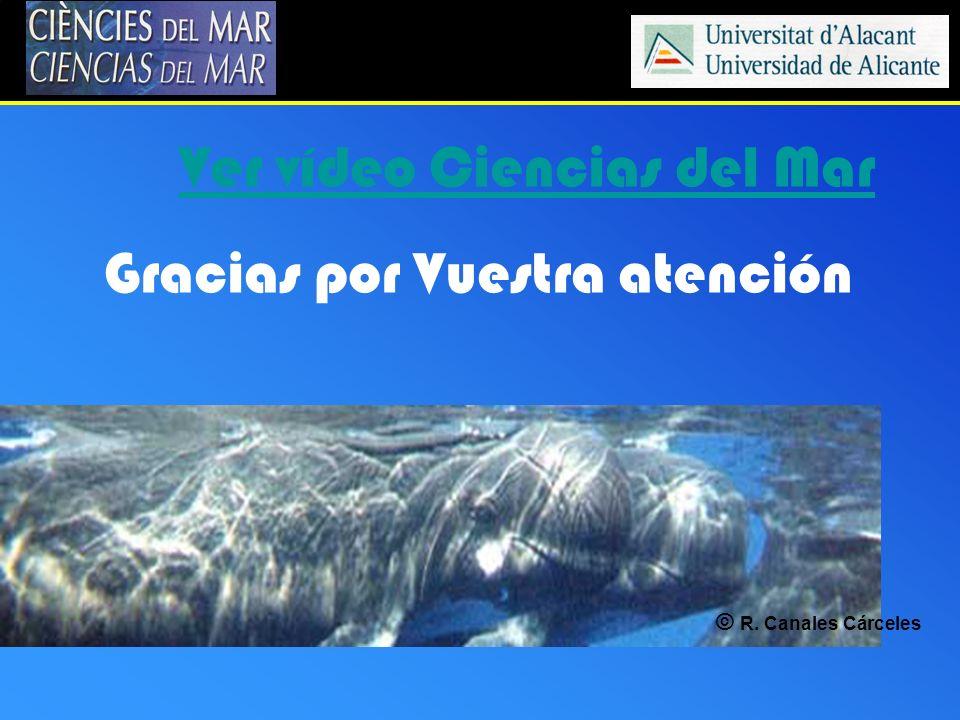 Ver vídeo Ciencias del Mar Gracias por Vuestra atención © R. Canales Cárceles