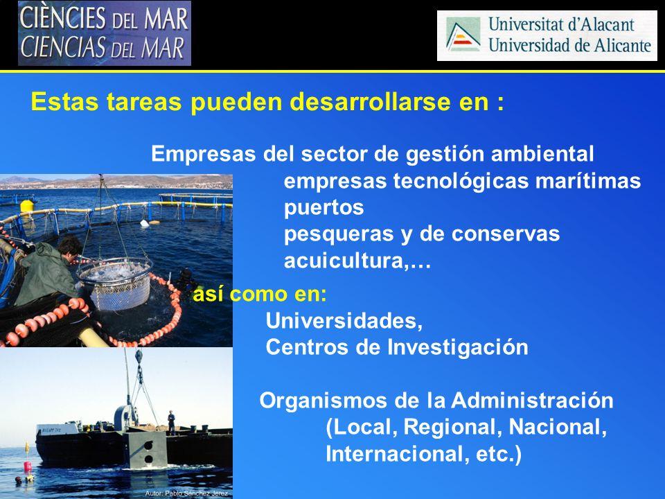 así como en: Universidades, Centros de Investigación Organismos de la Administración (Local, Regional, Nacional, Internacional, etc.) Estas tareas pue