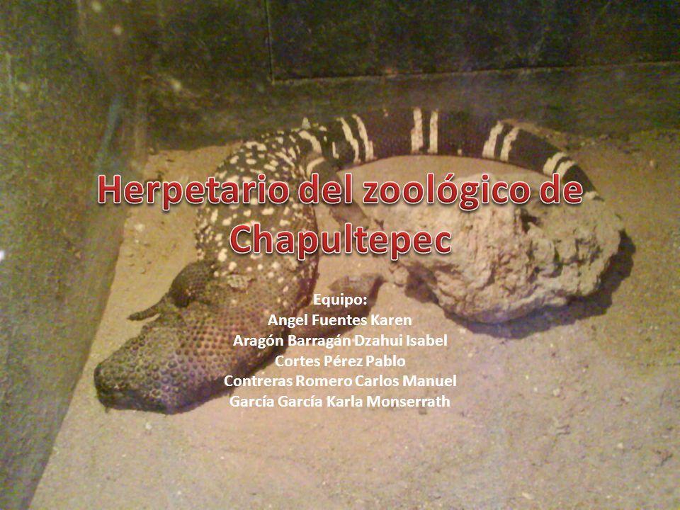 Es un lugar en donde se encuentran en cautiverio distintas especies de la herpetofauna, considerando dentro de esta anfibios (salamandras, ranas, etc.) y reptiles (víboras, lagartijas, tortugas, etc.).