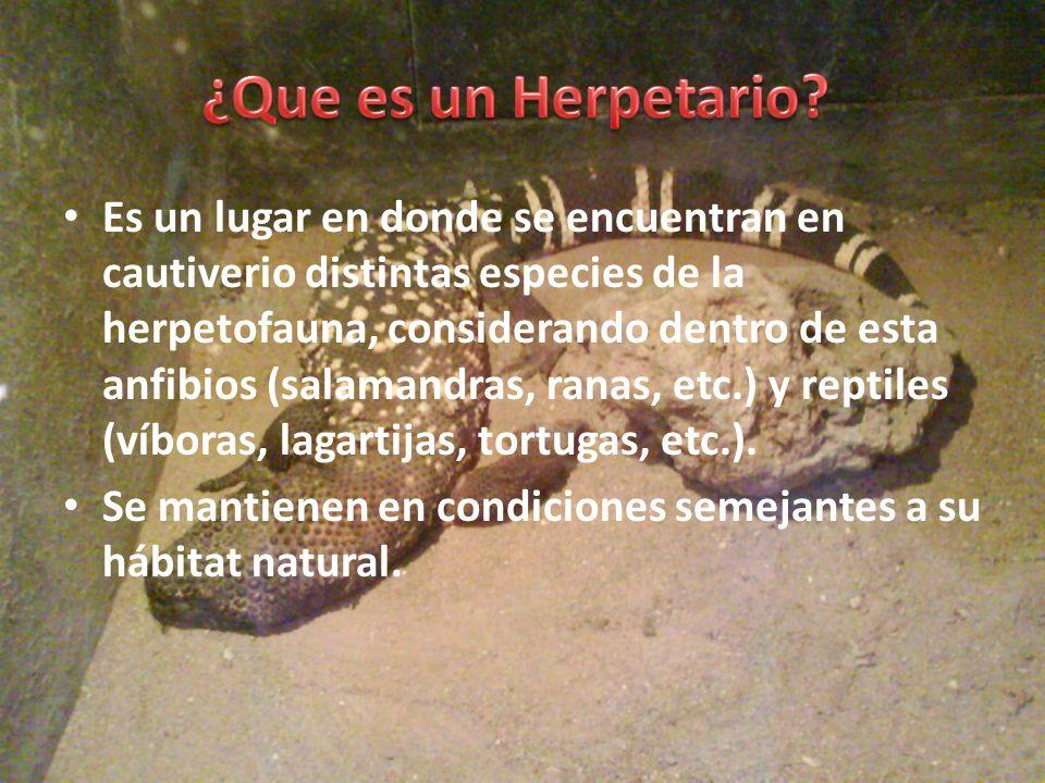 Es un lugar en donde se encuentran en cautiverio distintas especies de la herpetofauna, considerando dentro de esta anfibios (salamandras, ranas, etc.