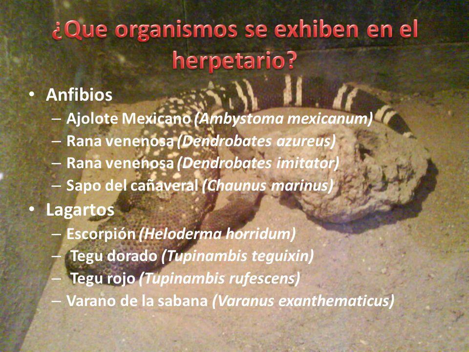 Serpientes: – Anaconda amarilla (Eunectes notaeus) – Anaconda verde (Eunectes murinus) – Boa arcoíris (Epicrates cenchria) – Boa común (Boa constrictor imperator) – Boa de Baja California (Lichanura trivirgata) – Boa esmeralda (Corallus caninus) – Bufadora (Bitis aretans) – Cabeza de cobre (Agkistrodon contortrix) – Cascabel de cola negra (Crotalus molossus) – Cascabel de montaña (Crotalus triseriatus) – Entre muchas otras.