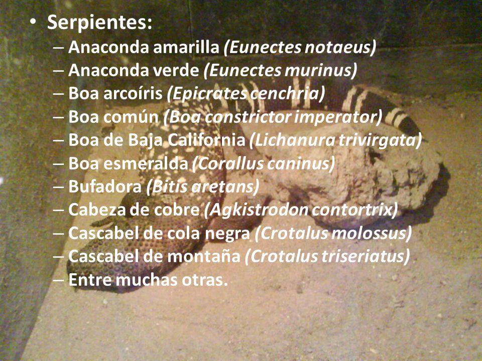 Serpientes: – Anaconda amarilla (Eunectes notaeus) – Anaconda verde (Eunectes murinus) – Boa arcoíris (Epicrates cenchria) – Boa común (Boa constricto