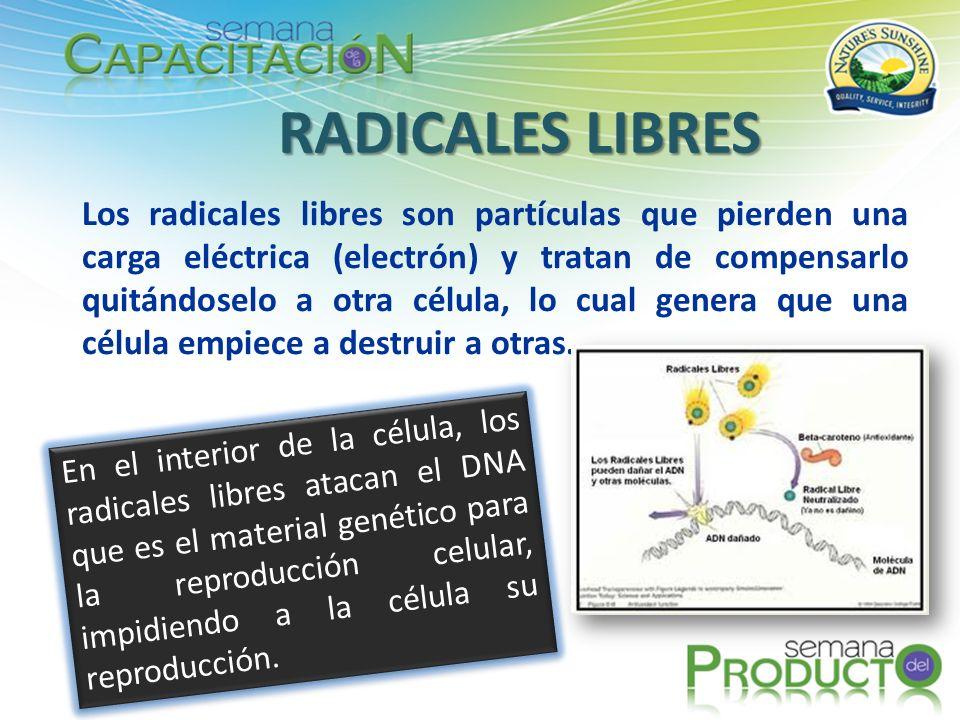 Los radicales libres contribuyen al proceso del envejecimiento cuando toman el electrón que les hace falta de las células del tejido colágeno de la piel.