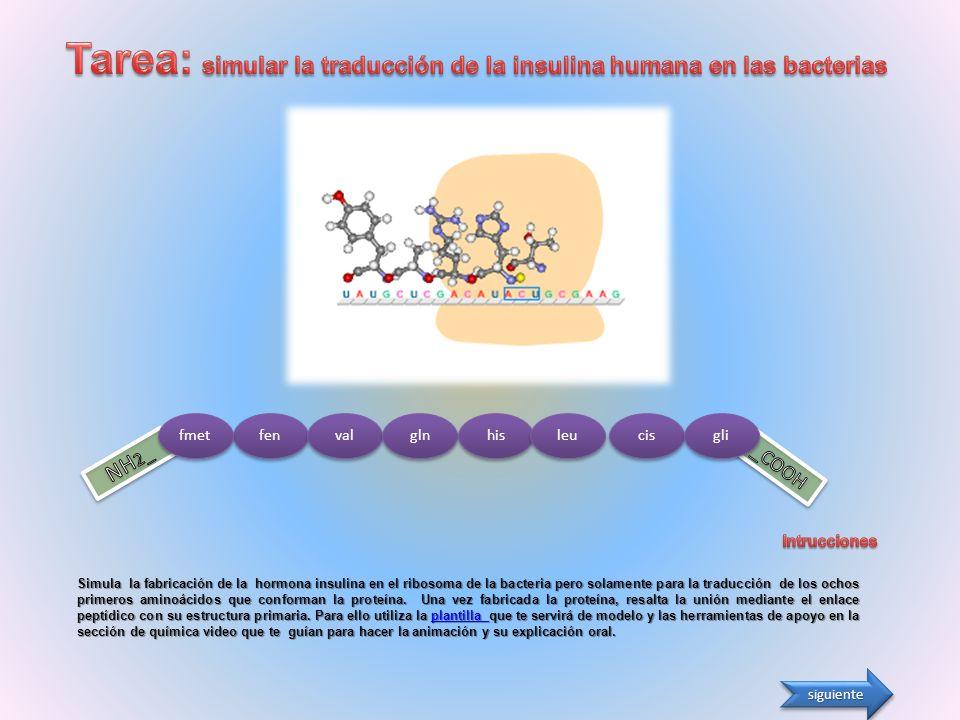 AAAAAAAAAAA P A Elongación IX: Entrada del complejo ARNt-glu correspondiente al 4º aminoácido, el glutamato.