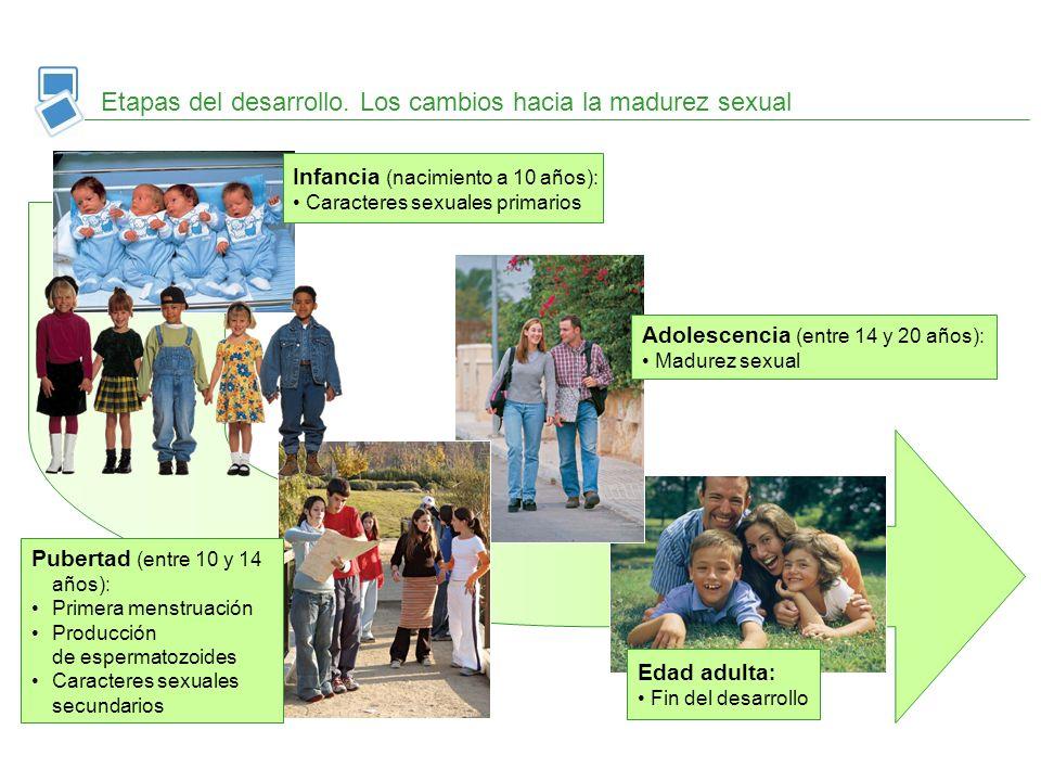 Etapas del desarrollo. Los cambios hacia la madurez sexual Infancia (nacimiento a 10 años): Caracteres sexuales primarios Edad adulta : Fin del desarr