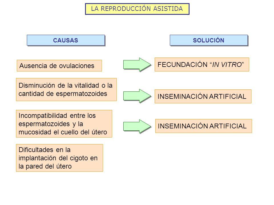LA REPRODUCCIÓN ASISTIDA Ausencia de ovulaciones FECUNDACIÓN IN VITRO CAUSAS SOLUCIÓN Disminución de la vitalidad o la cantidad de espermatozoides Inc