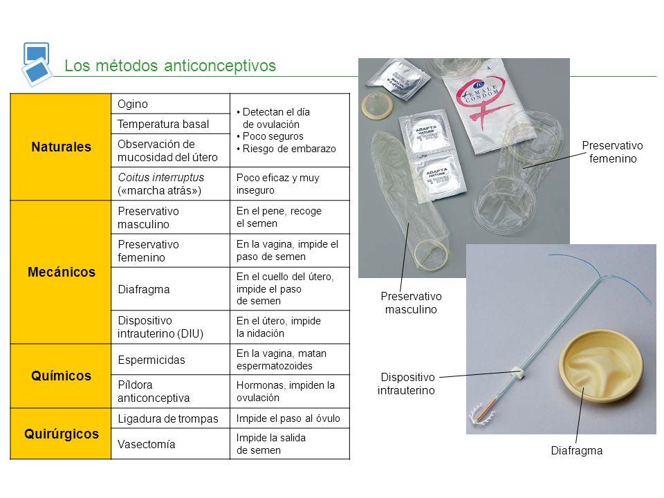 Los métodos anticonceptivos Naturales Ogino Detectan el día de ovulación Poco seguros Riesgo de embarazo Temperatura basal Observación de mucosidad de