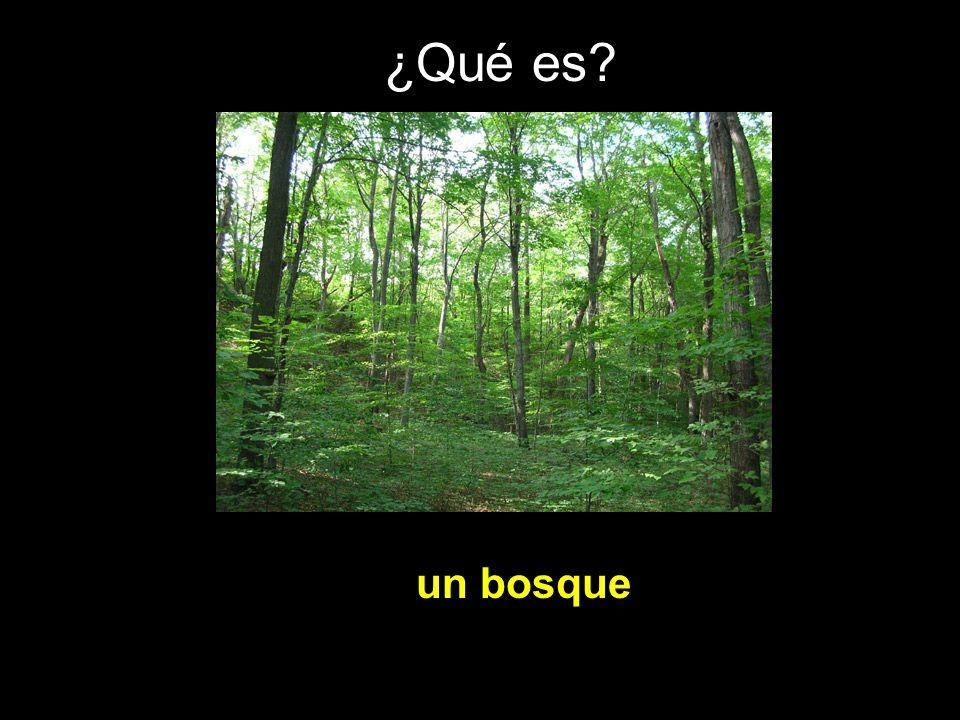 ¿Qué es? un bosque