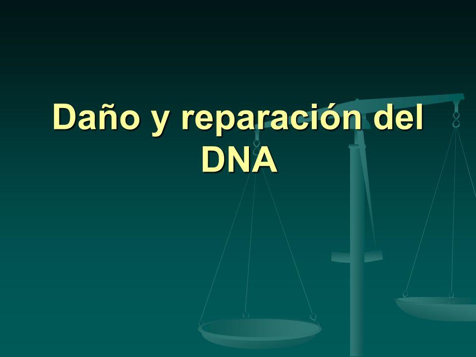 Daño al DNA Cambios en la secuencia debidos a: Cambios en la secuencia debidos a: Errores en la replicación.(Dna pol) Errores en la replicación.(Dna pol) Agentes del ambiente Agentes del ambiente Mutágenos químicos Mutágenos químicos Radiaciones Radiaciones