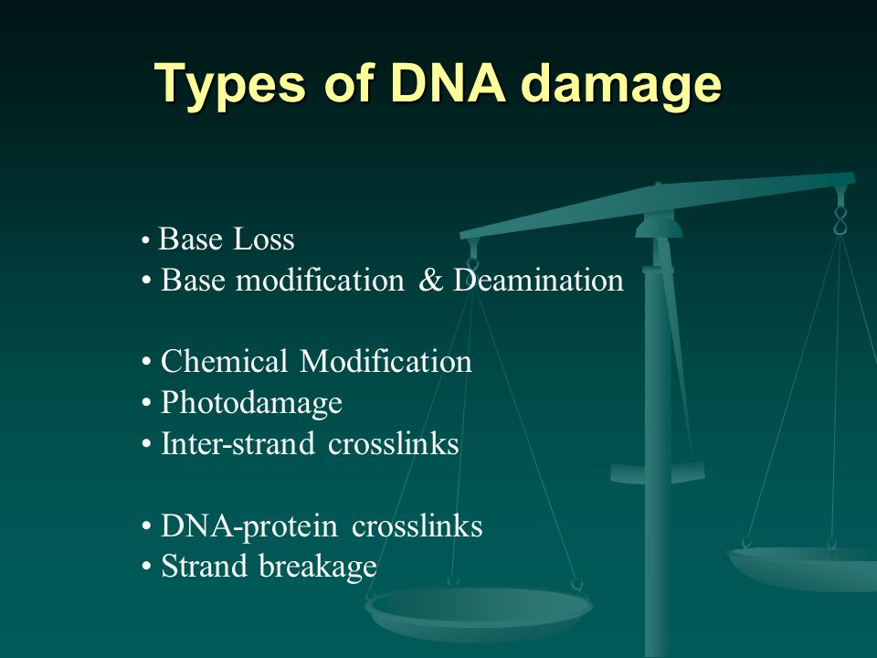 Base Loss Base modification & Deamination Chemical Modification Photodamage Inter-strand crosslinks DNA-protein crosslinks Strand breakage Types of DNA damage