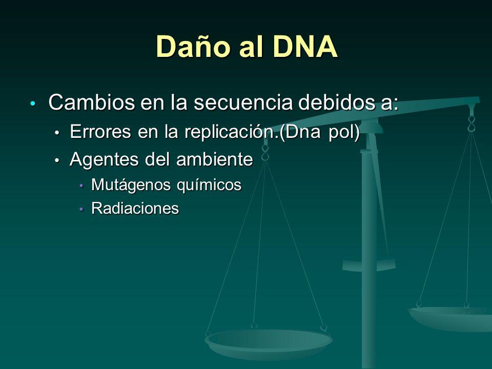 Si los cambios no son reparados Las células en proliferación o quiescentes acumularían tantas mutaciones que morirían.