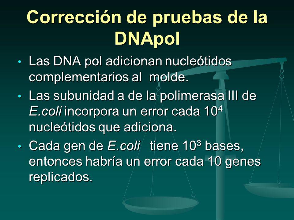 Frecuencia de mutación O sea 10 -1 mutaciones por gen y por generación.