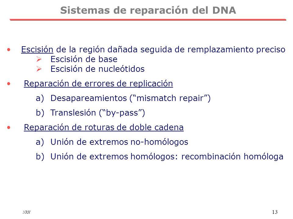 NRH 13 Sistemas de reparación del DNA Escisión de la región dañada seguida de remplazamiento preciso Escisión de base Escisión de nucleótidos Reparaci