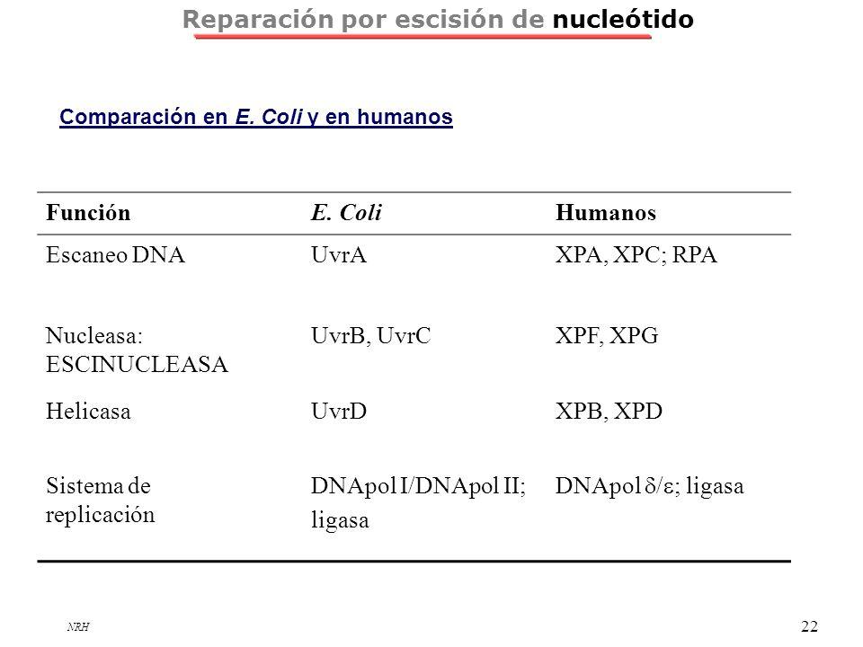 NRH 22 Reparación por escisión de nucleótido FunciónE. ColiHumanos Escaneo DNAUvrAXPA, XPC; RPA Nucleasa: ESCINUCLEASA UvrB, UvrCXPF, XPG HelicasaUvrD