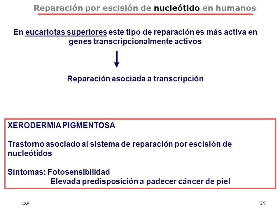 NRH 25 Reparación por escisión de nucleótido en humanos XERODERMIA PIGMENTOSA Trastorno asociado al sistema de reparación por escisión de nucleótidos