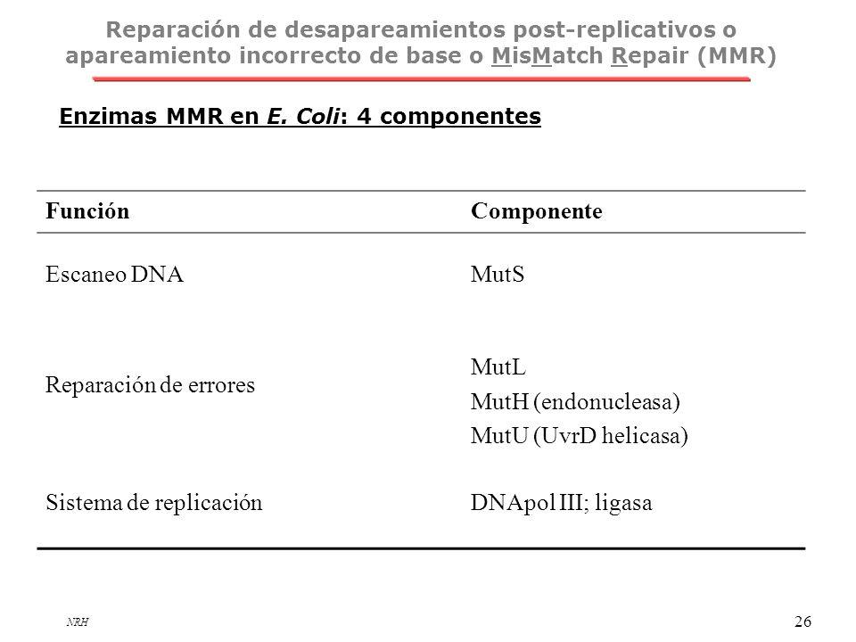 NRH 26 Enzimas MMR en E. Coli: 4 componentes FunciónComponente Escaneo DNAMutS Reparación de errores MutL MutH (endonucleasa) MutU (UvrD helicasa) Sis