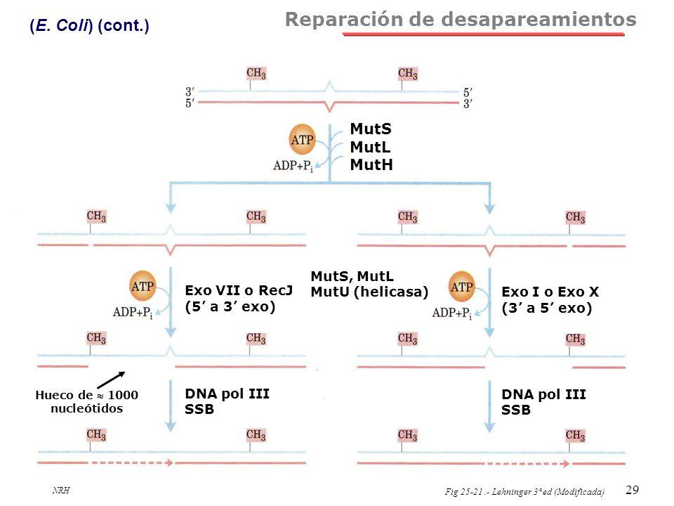 NRH 29 Reparación de desapareamientos (E. Coli) (cont.) Fig 25-21.- Lehninger 3ª ed (Modificada) MutS MutL MutH MutS, MutL MutU (helicasa) Exo VII o R