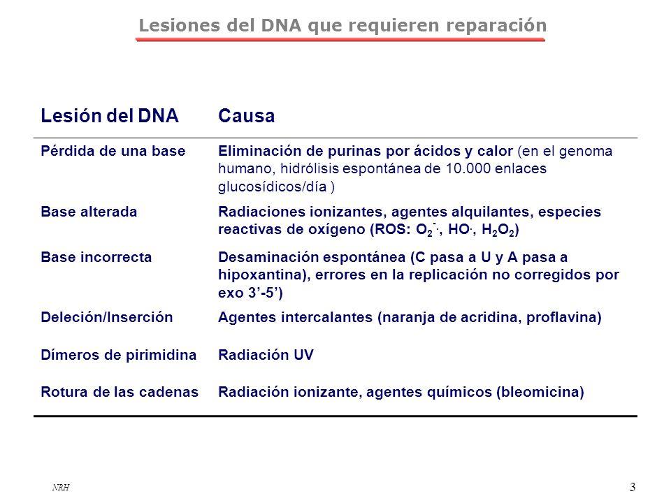 NRH 3 Lesiones del DNA que requieren reparación Lesión del DNACausa Pérdida de una baseEliminación de purinas por ácidos y calor (en el genoma humano,