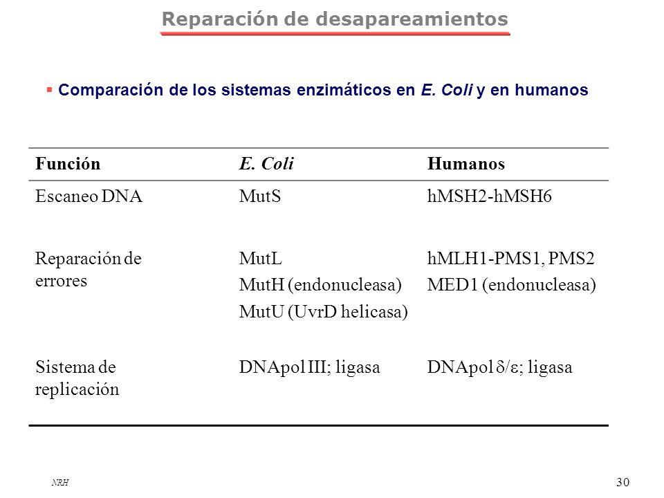 NRH 30 FunciónE. ColiHumanos Escaneo DNAMutShMSH2-hMSH6 Reparación de errores MutL MutH (endonucleasa) MutU (UvrD helicasa) hMLH1-PMS1, PMS2 MED1 (end